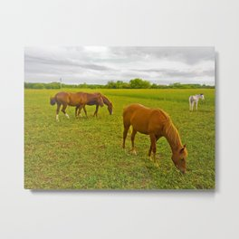Group of Horses Eating Grass Metal Print