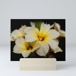 Yellow Mexican Satin Flowers Mini Art Print