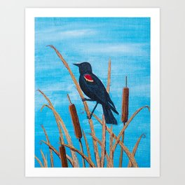Red Winged Blackbird at the Pond Art Print