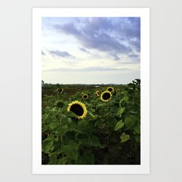 Sunflower Row Art Print