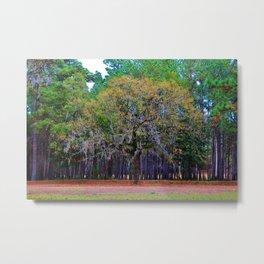 Pine Tree Landscape Metal Print