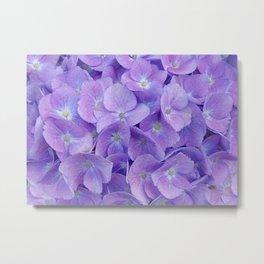 Hydrangea lilac Metal Print