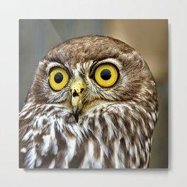 Barking Owl  Metal Print