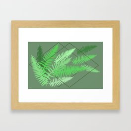 Ferns - Rockport State Park Framed Art Print