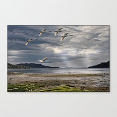 Swans on a Scottish Loch Canvas Print