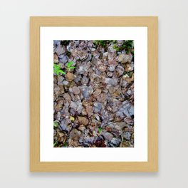 Last Years Fallen Foliage Framed Art Print