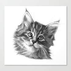 Maine Coon kitten G114 Canvas Print