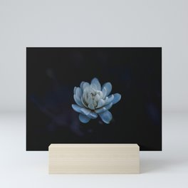 Flower photography by Xuan Nguyen Mini Art Print
