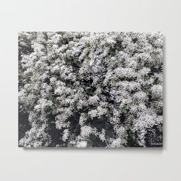 SNOW IN SUMMER Metal Print