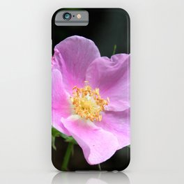Pale Pink Wild Rose iPhone Case