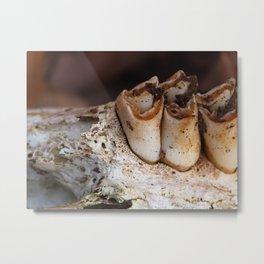 jawbone IV Metal Print