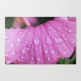Rain Drops on Flower - Plant Photography Canvas Print