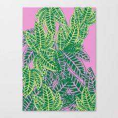 Zebra Plant  Canvas Print