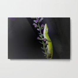 Sleeping Lizard 3 Metal Print