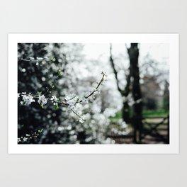 Holland Park #4 Art Print