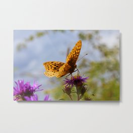 Butterfly and Asters Closeup Metal Print