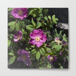 Wild Rose Phoenix Photograph Metal Print