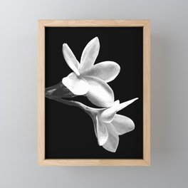 White Flowers Black Background Framed Mini Art Print