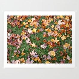 Fallen Foliage Art Print
