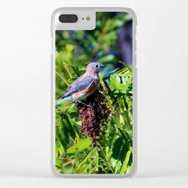 Beautiful Bluebird Clear iPhone Case