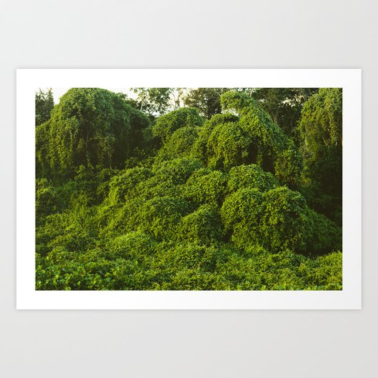 Jungle Plants in Pantanal, Brazil. Art Print