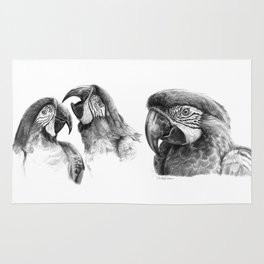 Macaw study SK0114 Rug