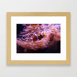 Found Nemo Framed Art Print