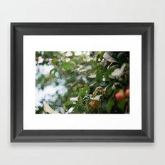 Crab Apple Tree Framed Art Print