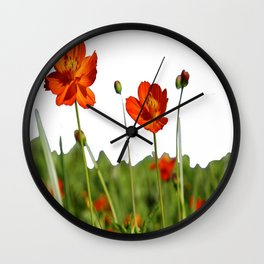 Red Cosmos Flower In A Meadow Isolated on White Wall Clock