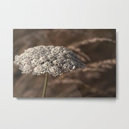 Anne's Lace Metal Print