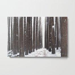 Sugar Pine Bliss 1 - Loren Shoemark Metal Print