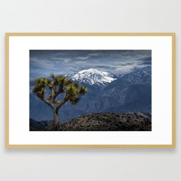 Joshua Tree at Keys View in Joshua Park National Park viewing the Little San Bernardino Mountains Framed Art Print