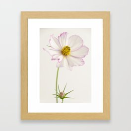 Sensation Cosmos White and Pink Framed Art Print