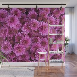 Chrysanthemum Wall Mural