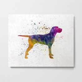 Hungarian Wirehaired Vizsla in watercolor Metal Print