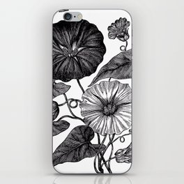 Victorian Botanical Illustration of Convolvulus in Full Bloom iPhone Skin