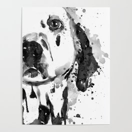Black And White Half Faced Dalmatian Dog Poster