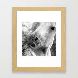 Horse Grooming Design Framed Art Print