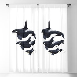 Orca (Orcinus orca) Blackout Curtain