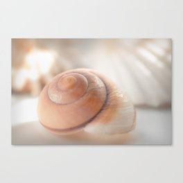 Snail shell, brown emotion Canvas Print