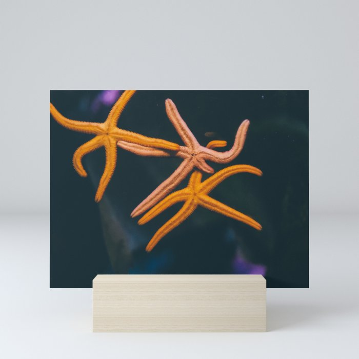 Starfish Mini Art Print