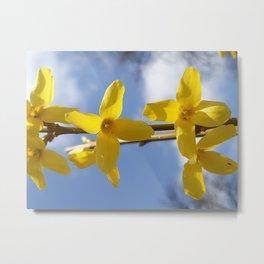 Forsythia and a Cloudy Sky Metal Print