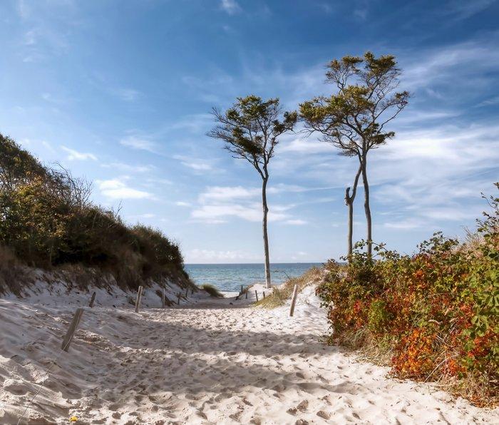 Entrance to the Sea - Ocean Beach Trees Metal Travel Mug