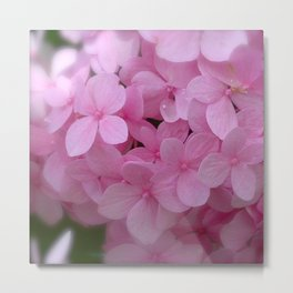 Pink Hydrangea - Flower Photography Metal Print