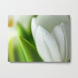 tulip flower  , tulip flower  games, tulip flower  blanket, tulip flower  duvet cover, Metal Print