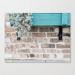 Plant on Bricks Canvas Print