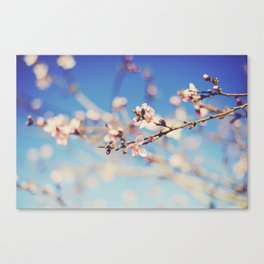 Early Spring. Canvas Print