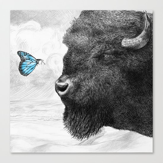 Bison and Butterfly (square format) Canvas Print