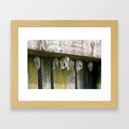 Gifts From Nature Framed Art Print