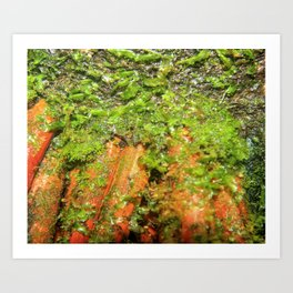 Closeup image of the roots of the Sierra Palm - Art Print